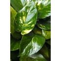 Concime per piante verdi