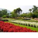 Concime universale per piante